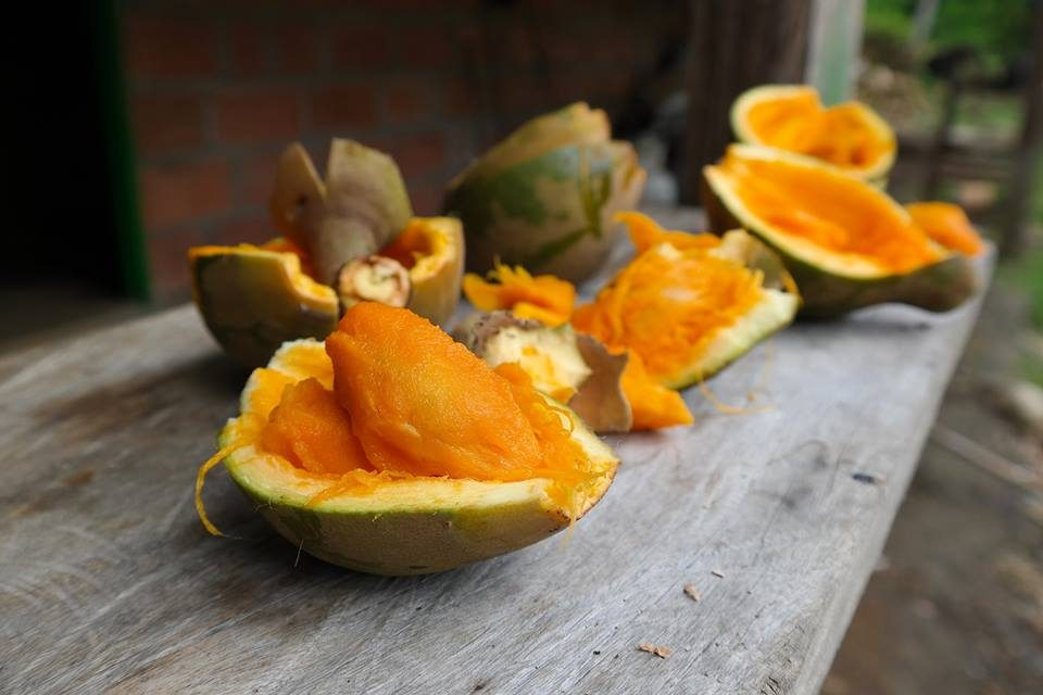 zapote, tropical fruit